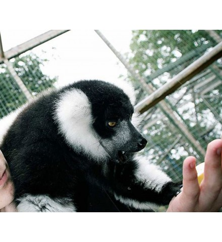 Madagascan Experience for Two Shropshire Lemur