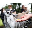 African Animal Encounter for Two Shropshire Lemur